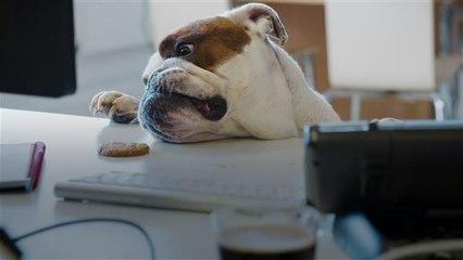 Besondere Berufe für Hunde