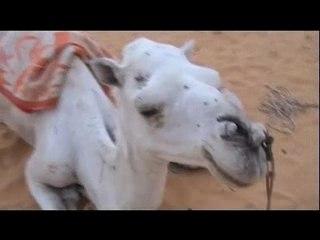 Mauritanie route du sable