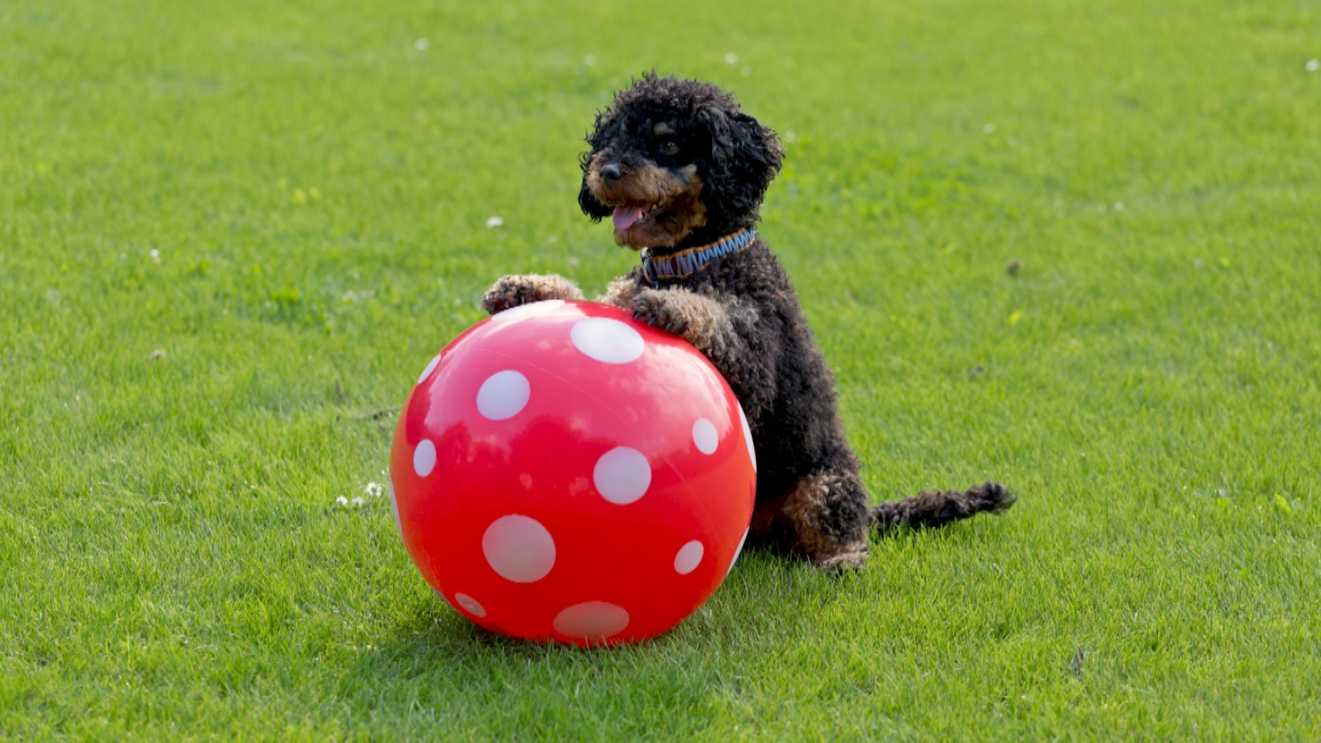 Get a Bachelor's Degree in Dog Training