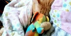 Cats sleeping with toys Compilation 2019 ,  Funny Cats sleeping ,  Cats Sleeping Video ,  Animal Videos #cats