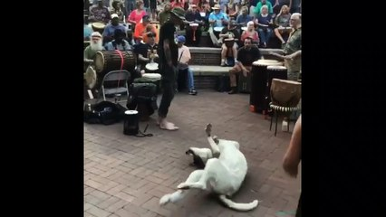 This dog can't help jiving to the music at a drum circle in Tennessee