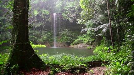 Rainforest Rain, Thunder & Birds   10 HOURS - 4K, Water Sound for Sleep, Insomnia, Meditation, Relaxing, Study, Rainforest Ambiance