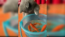 Cats React to Funny Fish - Funny Cat and Fish Reaction Compilation