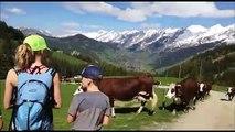 Emmontagnee : les vaches montent aux alpages à la clusaz