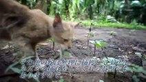 Ce petit chat courageux joue avec un serpent... même pas peur