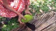 Bio Alimentaire du Village  Cuisine Traditionnelle Peu de Vert Jacquier Curry dans mon Village par la grand-mère