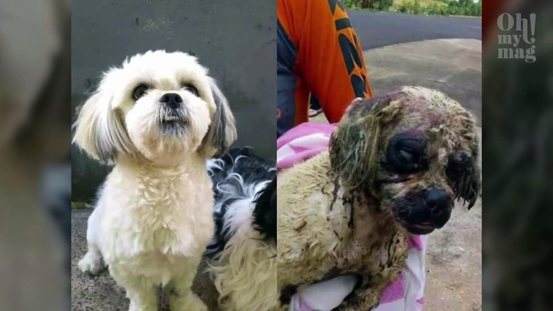 Crueldade! Cadela sofre ataque com ácidos e não resiste