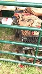 Texas farmer tells off 'prankster' teen bull for stealing food