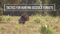 Tactics for Hunting Osceola Turkeys