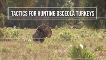 Tactics for Hunting Osceola Turkeys