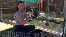 Morre : Alysson Petitjean et ses lapins sauteurs d'obstacles