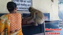 Thirsty Monkey and the Women - Very Emotional - Human and Animal Bond in india