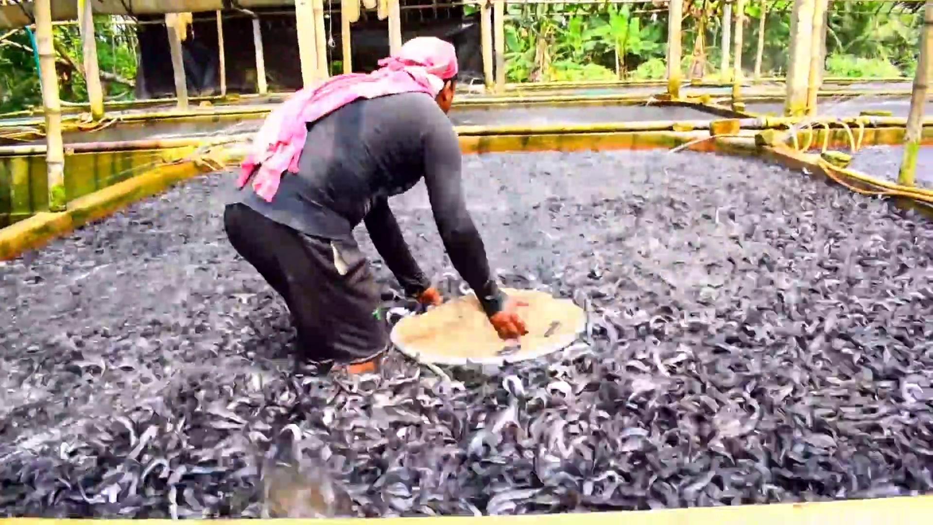 Hybrid Magur Fish Farming Business in India –  Catfish Farming