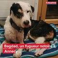 Bagdad, le chien retrouvé cinq ans après sa disparition à Annecy
