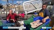 Bretagne : des pêcheurs en guerre contre le phoque gris