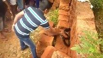 Ils trouvent un énorme cobra royal piégé dans un mur