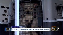MCACC shipping thousands of dogs to shelters across U.S.