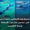 شاهد.. العيد في مرسى علم.. رياضات مائية وطبيعة صافية
