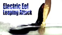 Electric Eel in Action