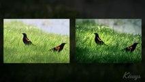 """Lightroom Speed Edit : """"2 oiseaux dans un parc"""""""
