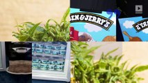 Ben & Jerry's Looking to Release CBD-Infused Ice Cream