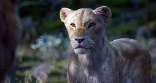 """Bande annonce """"Le Roi Lion"""" sorti en salles le 17 Juillet 2019 avec la voix de Beyoncé pour Nala"""