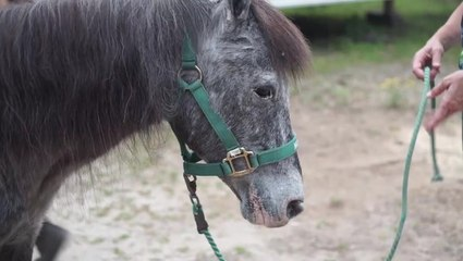 Molly The Pony Gives Kids and Adults a New Beginning