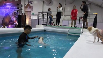 Dogs make a splash in diving competition at Thai pet show