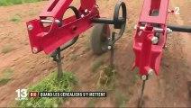 Agriculture : quand les céréaliers se mettent au bio