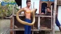 Il joue avec son énorme cobra royal... Impressionnant