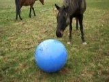 attention le gros ballon arrive !