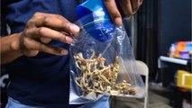 U.S. Cities Start To Decriminalize Magic Mushrooms