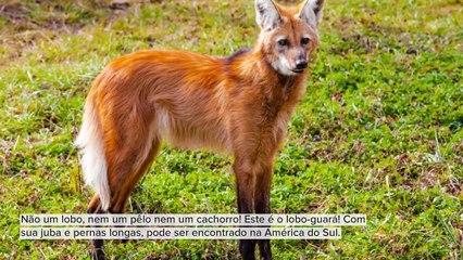 ANIMAIS BONITOS E DESCONHECIDOS