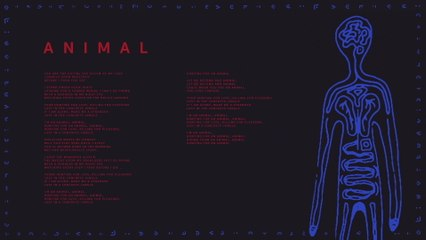 AURORA - Animal