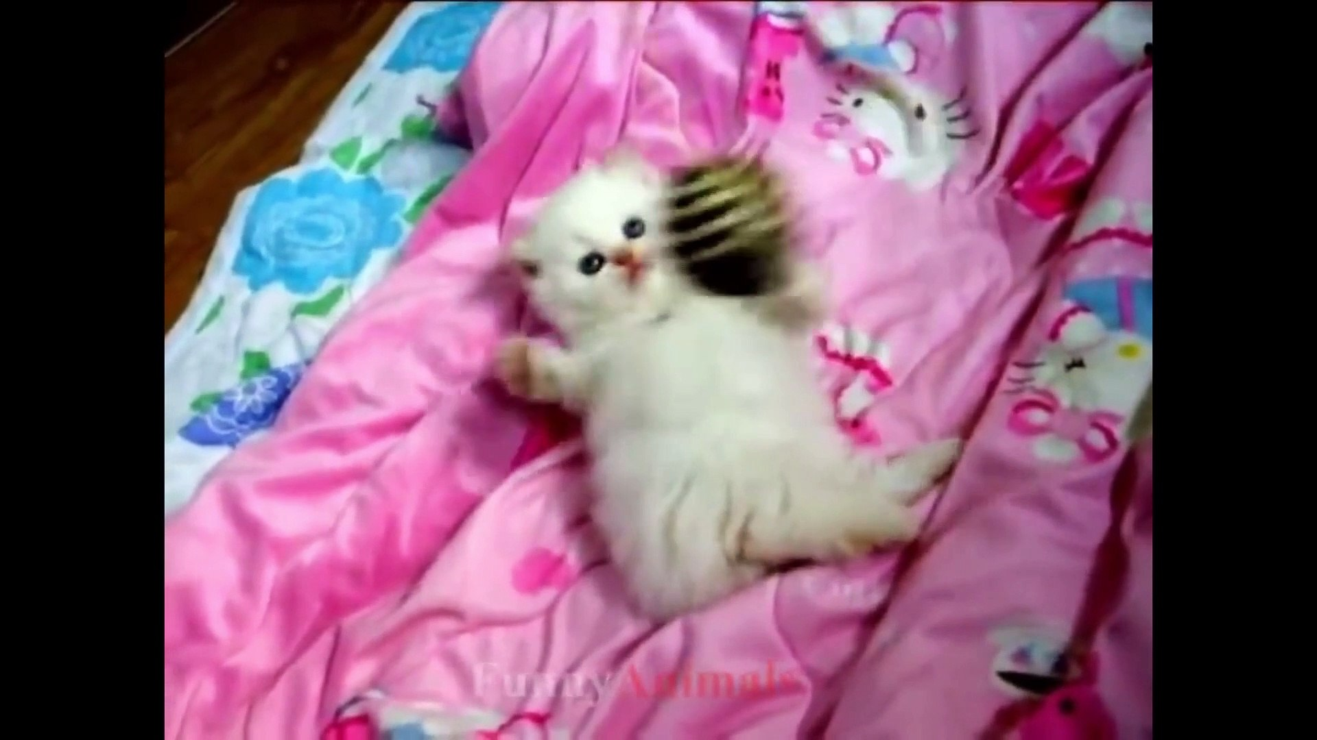 cute kittens videos compilation 2019