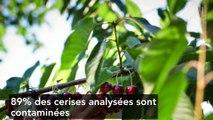 Fruits et légumes non bio : des pesticides retrouvés en grande quantité