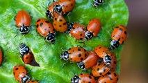 Massive Ladybug Swarm Appears On Weather Radar