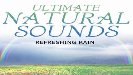Beautiful Nature Sound: Refreshing Rain for Sleep, Study, Natural White Noise