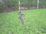 Un énorme anaconda trouvé en bord de route au brésil