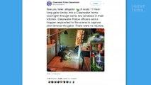 Mitten in der Nacht steht sie in ihrer Küche plötzlich vor einem 3 Meter langen Alligator (Video)