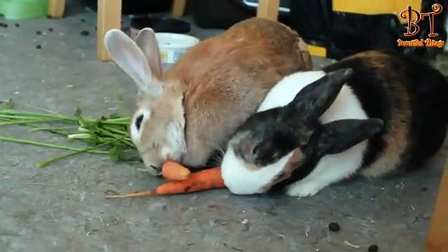 Cute rabbits nibbling carrots  Compilation 2019 | Animal Videos