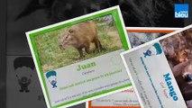 Découvrez l'Auvergne: Les arrivées 2019 du Parc Animalier d'Auvergne d'Ardes sur Couze (63)