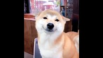 Ce chien vous fait de grands sourires