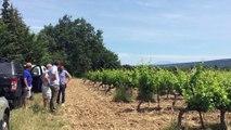 Avec l'agroforesterie, un groupe de vignerons prend un tournant écologique