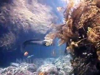 Un poulpe fait du rodéo sur une murène