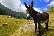 La insólita historia de un zamorano, un burro y George Washington