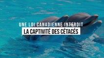 Le Canada interdit la captivité et l'élevage de cétacés