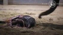 Regardez la naissance d'un bébé éléphant la nuit dernière: Vidéo émouvante!