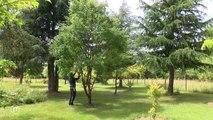 L'arboretum , lieu d'exception