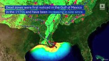 Gulf of Mexico to Possibly Experience Largest Dead Zone in History